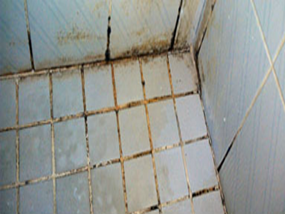 mould on tiles